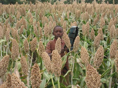 kid in sorghum field