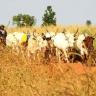 livestock herder in Mali