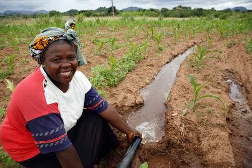 smallholder farmer IWMI