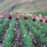Peruvian potato farmers. Photo S. De Haan (CIP)