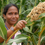 Sorghum in Asia