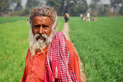 Farmer in wheat field, Bihar, India