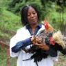 AWARD Fellow Filomena dos Anjos, a senior lecturer and veterinarian at Eduardo Mondlane University, is developing a more economical poultry feed in Mozambique, where more than 70 percent of rural families raise chickens
