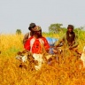 CGIAR and CAADP join forces for agricultural transformation in Africa