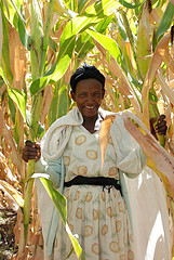 A radiant smile for nutritious maize
