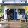 Certified potato seed saves African farmers from ruin