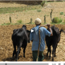 Changing the fortunes of farmers in Ethiopia through better livestock feed..