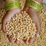 Decoded genome of chickpea, a leading grain legume for many poor smallholder farmers, promises improved livelihoods in marginal environments