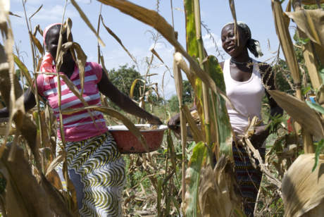 Women in a maize field, Faso Kaba, Mali. Photo credit: CIMMYT
