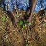 Diolo Celine, Planting Gnetum (okok) - Village Minwoho Centre, Region Ewodioula, Lekie Province, Cameroon.  Photo: Ollivier Girard/CIFOR