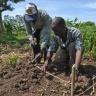 Crop diversification in lower Nyando, Kenya. Photo: K. Trautmann/CCAFS