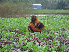 A women in her vegetable plot in Bangladesh. Photo by Jharendu Pant, 2010.