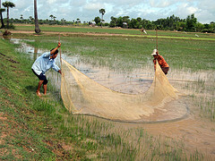Rice field fisheries is common in Cambodia. Photo by Jharendu Pant, 2009.