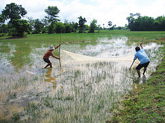 Rice field fisheries,  Cambodia. Photo by Jharendu Pant, 2009.