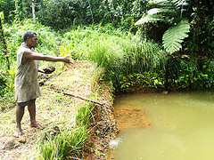 Lionel Maeliu feeding his tilapia fish, Malaita Province,Solomon Islands. Photo by Daykin Harohau, 2013.