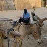 Farmer workshop in climate information, Kaffrine, Senegal (Photo J. Hansen, CCAFS)