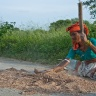 Separating the chaff from the grain. Photo: ICRISAT