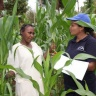 Dr. Mutegi gathering data from a farmer in Kenya. (Photo IITA)