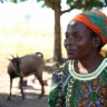 A farmer's wife in Milange, Mozambique