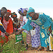 Farmers' field day in Mali showcases profitable groundnut production