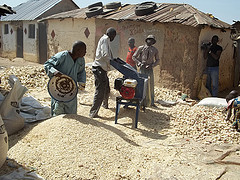 Threshing maize with fabricated threshing machine