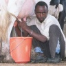 """Youth milking on a dairy farm in Machakos, Kenya"" (ILRI/Brad Collis)"