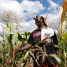 Drought tolerant maize route out of poverty for community-based seed producer, Kenya. Photo credit: Anne Wangalachi/CIMMYT.