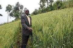Wheat in Rwanda