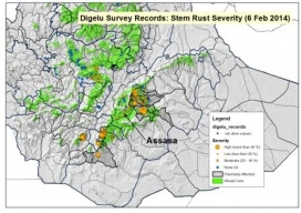 Overview Map on RustTracker.org showing Ethiopia localized stem rust epidemic