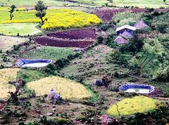 WH ponds ethiopia