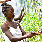 Visit to the Lower Kamula Youth Group and their greenhouse in Kenya