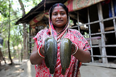 A woman showing fish caught from her pond in Khulna, Bangladesh. Photo by M. Yousuf Tushar.