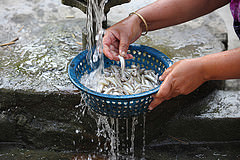 A woman cleaning mola, a nutritious small fish, at her house in Jessore, Bangladesh. Photo by M. Yousuf Tushar.