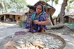 A woman cleaning fish at her house in Jessore, Bangladesh. Photo by M. Yousuf Tushar. 10