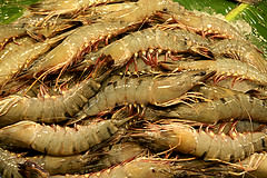 WorldFish posted a photo: Shrimps for sale at a local fish market in Khulna, Bangladesh. Photo by M. Yousuf Tushar, 2014