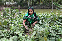 A woman farmer managing the harvests of her farm in Khulna, Bangladesh. Photo by M. Yousuf Tushar, 2014