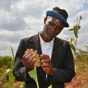 The Global Alliance for Climate-Smart Agriculture