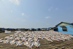 Fish being dried in Chnoc Trou village, Kampong Chhnang province, Cambodia. Photo by Sylyvann Borei.