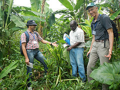 Field training on Banana Bunchy Top Disease at Burundi