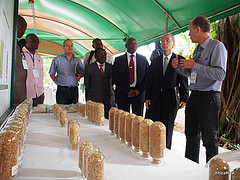 Scenes from the inaugural ceremony of the Rice Innovation Fair of Scalable Technologies,  1-2 September 2014, AfricaRice, Cotonou, Benin.