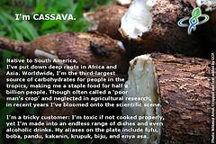 CASSAVA – answer to CROP QUIZ No 6: World Food Day 2014 #WFD2014