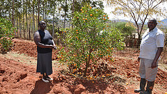Climate smart agriculture in Machakos county
