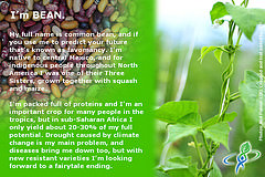 BEAN – answer to CROP QUIZ No 9: World Food Day 2014 #WFD2014