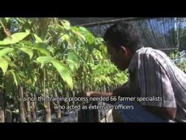 Regrowing Aceh: farmers training farmers