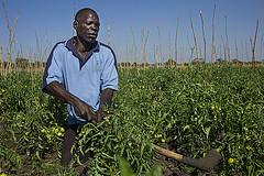 George Mubita Munalula working in his garden, Zambia. Photo by Anna Fawcus.