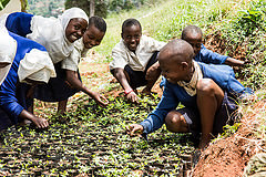 Young people learning reforestation