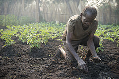Planting seeds in community garden, Zambia. Photo by Anna Fawcus.