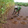 Innovative farming practices in the Sahel