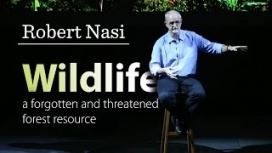 Robert Nasi – Wildlife: a forgotten and threatened forest resource