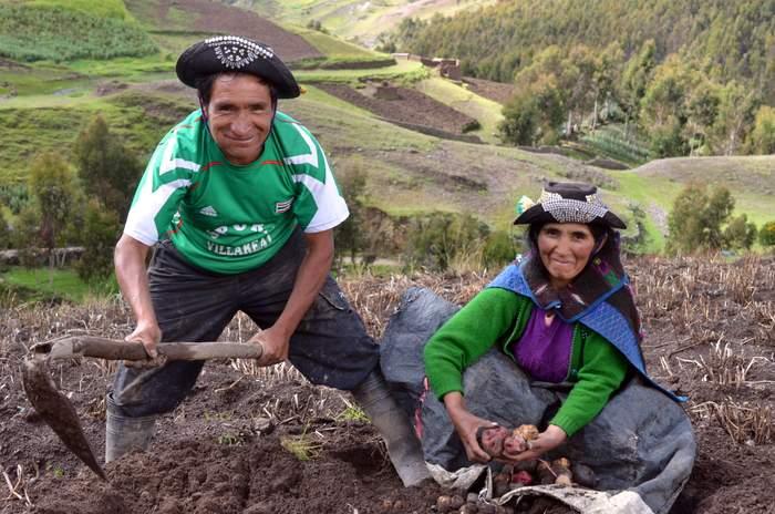 Potato custodian farmers from Huancavelica, Peru